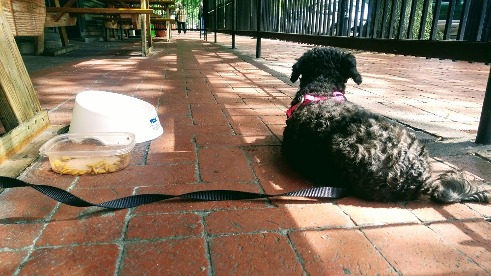 Truffles chilling in the sun at Longboards